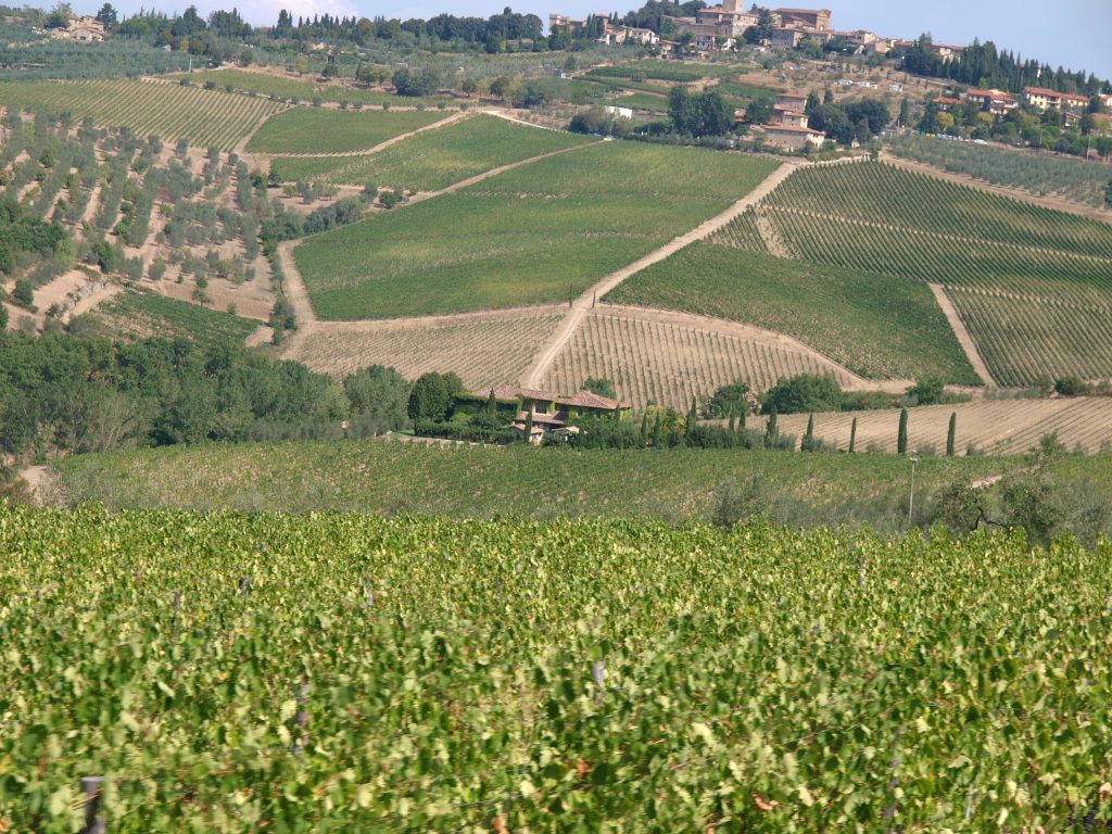 Green rolling hills, trails and paths among the green | Tuscan red wines | Tuscan Wanders Travel Blog