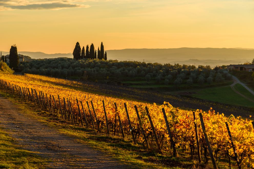 Chianti landscape at dusk   Day trips from Tuscany