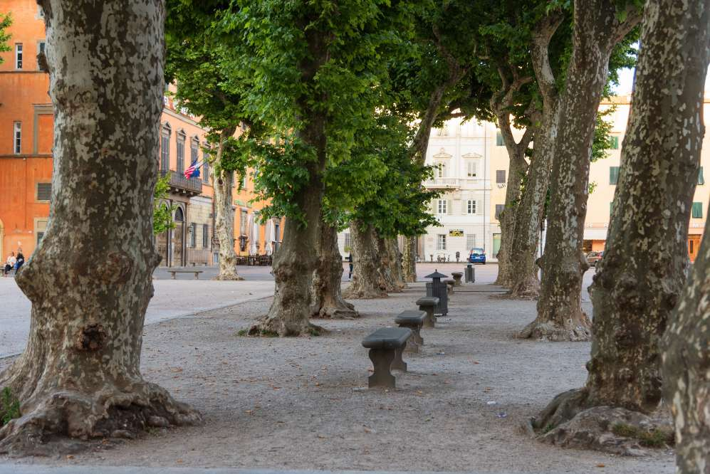 Piazza Napoleone, Lucca, seats under the trees